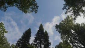 Nuages blancs entourés par les arbres luxuriants contre un beau ciel clair Arbres verts dans la vue de ciel de fond de Images libres de droits