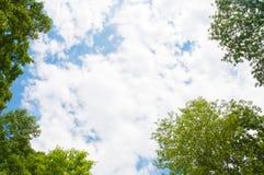 Nuages blancs entourés par les arbres verts contre un ciel bleu image libre de droits