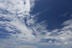 Nuages blancs et pelucheux et oiseaux féeriques blancs de sterne dans le ciel bleu Photo stock