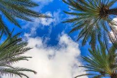 Nuages blancs, palmiers et ciel bleu photographie stock libre de droits
