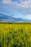 nuages bleus sur une clairière verte Photographie stock libre de droits