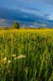 nuages bleus sur une clairière verte Photo stock