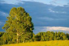 nuages bleus sur une clairière verte Image stock