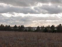 nuages déprimés d'horizon au-dessus de champ de ferme d'automne Photographie stock