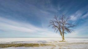 Nuages dérivant au-dessus du lac neigeux avec l'arbre clips vidéos