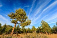 Nuages d'arbre et de coucher du soleil Photos libres de droits