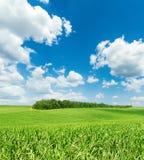 Nuages dans le domaine de ciel bleu et d'herbe verte Photographie stock libre de droits