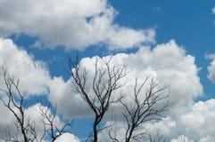 Nuages dans les branches des arbres Silhouettes des branches sèches contre un ciel nuageux bleu pour le fond abstrait créatif de  Photographie stock
