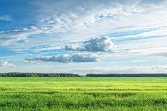Nuages de champ Photographie stock