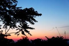 Nuages de Colorfull et arbres foncés photo libre de droits