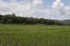Nuages de gisement de riz Images libres de droits