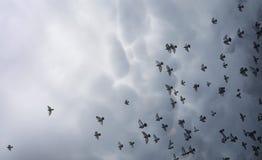 Nuages de pluie dans le ciel et un troupeau des pigeons L'escroquerie religieuse Images libres de droits