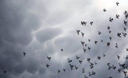 Nuages de pluie dans le ciel et un troupeau des pigeons L'escroquerie religieuse Photographie stock