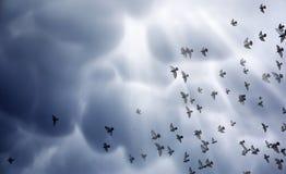 Nuages de pluie dans le ciel et un troupeau des pigeons L'escroquerie religieuse Photos stock