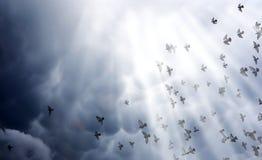 Nuages de pluie dans le ciel et un troupeau des pigeons L'escroquerie religieuse Photographie stock libre de droits