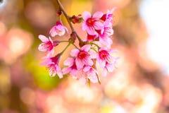 Nuages de Sakura Thailand With et ciel lumineux photographie stock