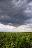Nuages de tempête au-dessus de la prairie Photos stock