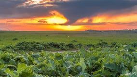Nuages de tempête dans les montagnes dans Kazakhstan Timelapse 4K clips vidéos