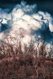 Nuages de tempête massifs au-dessus des arbres secs Photos stock