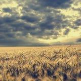 Nuages de tempête recueillant au-dessus d'un champ de blé Images libres de droits