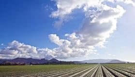 Nuages de terres cultivables photos stock