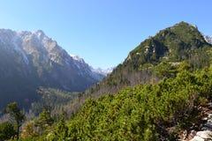 Nuages en bois de vert de nature de montagne image stock