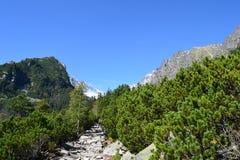 Nuages en bois de vert de nature de montagne photographie stock libre de droits