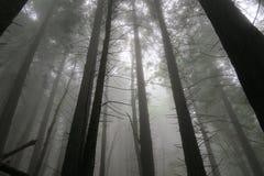 Nuages entourant les arbres Photographie stock libre de droits