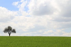 Nuages et arbre Photographie stock libre de droits