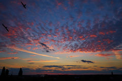 Nuages et oiseaux colorés dans le ciel au coucher du soleil Photo stock