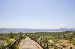 Nuages et usine de désert photographie stock libre de droits