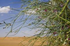 Nuages et usine de désert images libres de droits