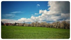 Nuages et vert Photo stock