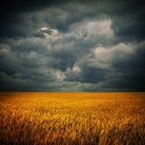 Nuages foncés au-dessus de zone de blé Images stock