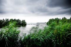 Nuages foncés sur le lac avec les cannes et les arbres verts Photographie stock libre de droits