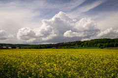 Nuages gentils Image stock