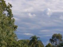 Nuages gris, arbres verts photo libre de droits