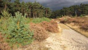 Nuages gris au-dessus de forêt Image libre de droits