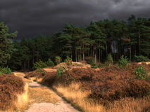 Nuages gris au-dessus de forêt Images stock
