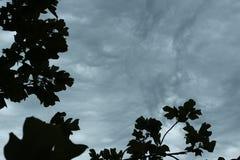 Nuages orageux de ondulation Photo libre de droits