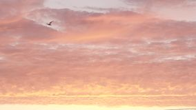Nuages savoureux stupéfiants de sucrerie de zéphyr de lever de soleil de couleur rose tendre pendant le matin banque de vidéos
