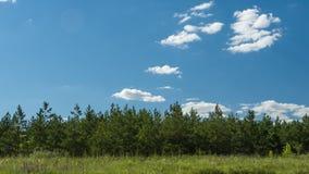 Nuages se déplaçant au-dessus du nettoyage d'agriculteurs d'agriculture de nettoyage de jour ensoleillé de sapin de pin de forêt banque de vidéos