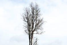 Nuages secs de blanc d'arbre Image stock