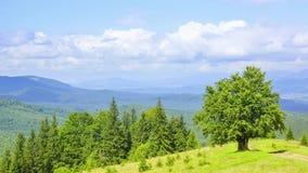 Nuages sur les montagnes boisées et l'arbre isolé Laps de temps banque de vidéos