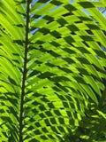 Nuance verte Image libre de droits