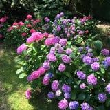 50 nuances de rose Photographie stock libre de droits