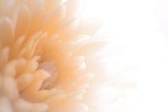 Nuances molles de pétale de style doux doux Idées de décor de fond Sépia Images stock