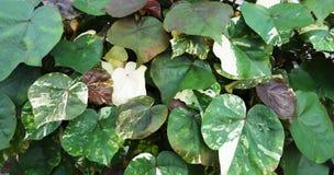 Nuances multiples des feuilles vertes Photographie stock libre de droits