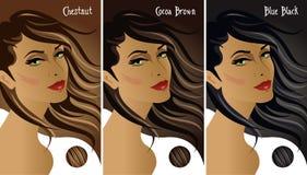 Nuancier de cheveux foncés Images libres de droits