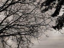 nube fotografia stock libera da diritti